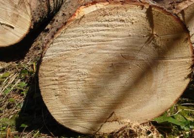 weisstannenholz